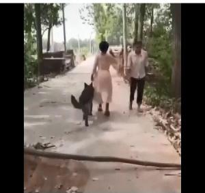 犬「目が見えない人、、前にある棒が危ない!」