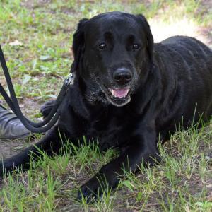 犬が新型コロナ感染の有無を嗅ぎ分け、短期間の訓練で-ドイツの研究