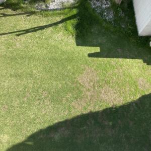 芝庭メンテナンス グラステン水和剤の散布 20210923