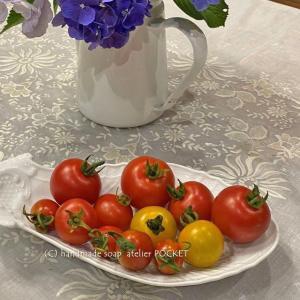 避難したトマト