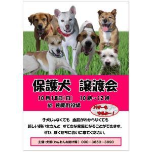 保護犬の譲渡会のお知らせ