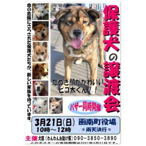 犬部わんわんお助け隊『3月の保護犬譲渡会』開催のお知らせ