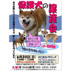 犬部わんわんお助け隊『6月の保護犬譲渡会』開催のお知らせ