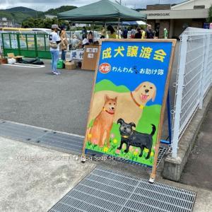 犬部わんわんお助け隊『保護犬の譲渡会』に出店しました