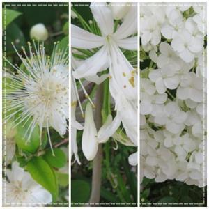 <緑と白の庭・・・^_-)-☆>