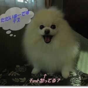 <我が家のワンコ・・・*´▽`*>