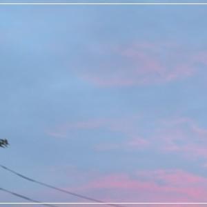<朝夕涼しく好い感じ・・・*´▽`*>