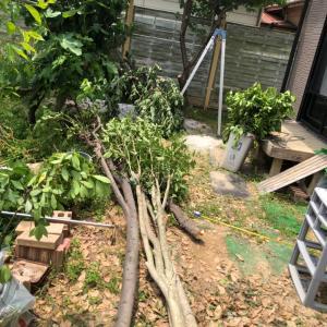 庭木の伐採 娘の返事