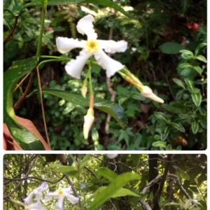 野山の花たち。