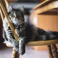 アナスイのようなゴシックテイストの黒の猫脚ドレッサー