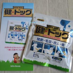 ワンちゃん用のコラーゲンタブレット【健ドッグ】で愛犬の健康維持に!