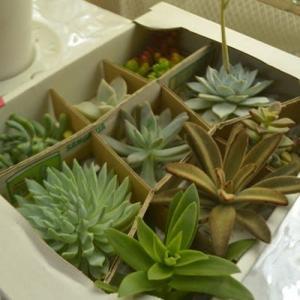 好きだなー。植物
