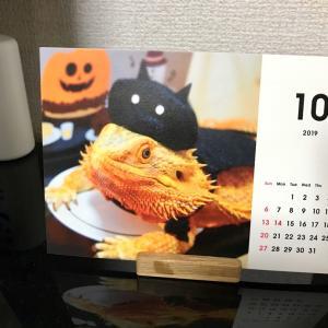 10月ハチュ測定としろとり動物園