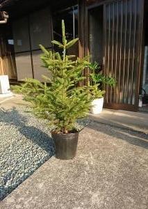 お庭いじり4・シンボルツリー