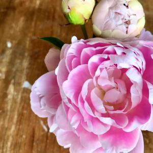 ステキな葉山のお花屋さん