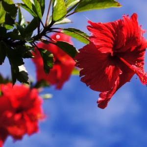 ただ花だけ 沖縄で撮った花の写真12選
