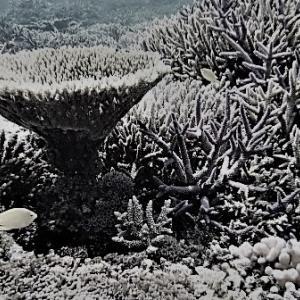 沖縄の珊瑚礁はこのまま減り続けるのか