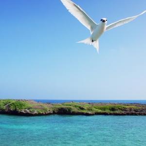 池間島のカギンミビーチ 別名ロープ海岸