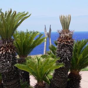 ほとんど沖縄の徳之島にあるソテツ群と奇岩