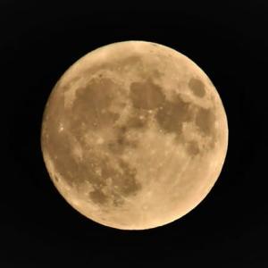 美しい月・・美しい猫・・