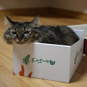 新しい箱・・