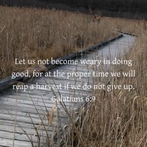 11/11 ガラテヤ人への手紙 6:9 良いことを行うのに疲れ果ててしまわないように