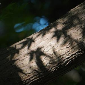 幹に影を落として樹の模様となる