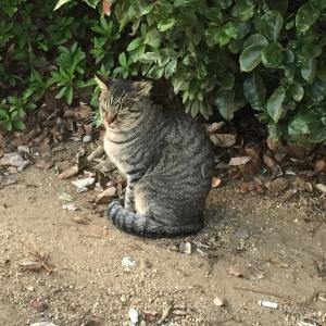 猫の外飼いの危険性をもっと知ってほしい。