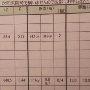 D8 卵胞チェック~刺激続行☆