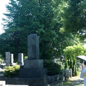谷中霊園の樹木葬・きもの友達と~~谷中周辺・紅花&雀帯