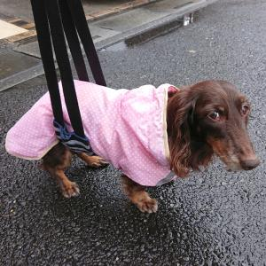 冷たい雨の土曜日
