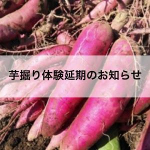 【お知らせ】芋掘り体験延期