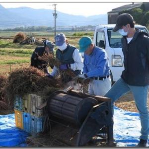 蕎麦の収穫―脱穀・調整