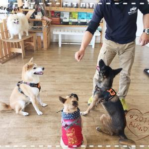 【中型犬day】8月のお誕生日ワンコ達♪