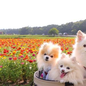 *8月3日(土)花の都公園へ