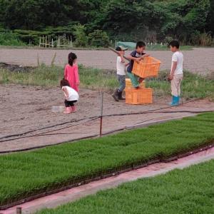 今週2度のタマネギ収穫のお手伝い「バアバ 美味しいご飯を作ってくれてありがとう」に(*^-^*)