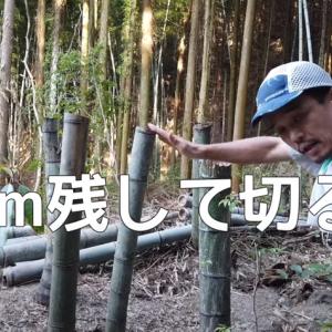 竹を枯らす方法