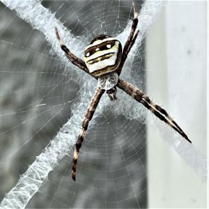 クモのX糸
