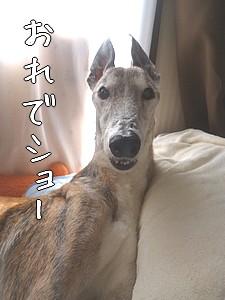 アイス様抱き枕作戦(成功?)