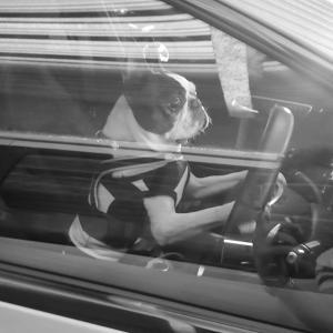 プップー♪ 運転手です♪