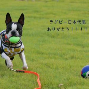 ラグビー日本代表!ありがとー!
