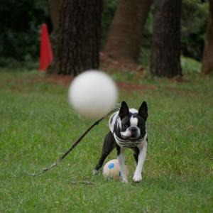 ボールは2個使い!
