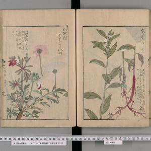 「神奈川県植物誌2018 電子版」の発行と、当ブログでの過去の引用箇所との照合(その1)