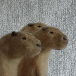 ●羊毛フェルト カピバラ なんかアレに似てる!