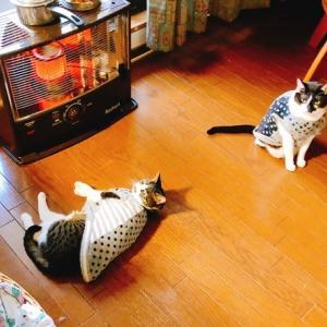 うにつつみと猫ちゃん軍手