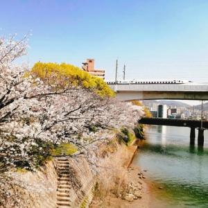 ひっそり桜