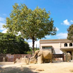 またまた動物園