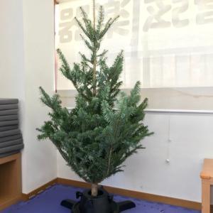 今年ももみの木が来たよ!