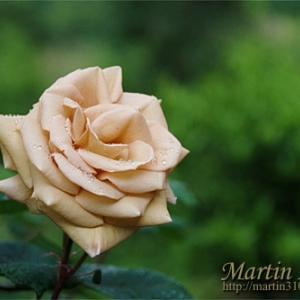 5月の庭…バラの彩が加わる。
