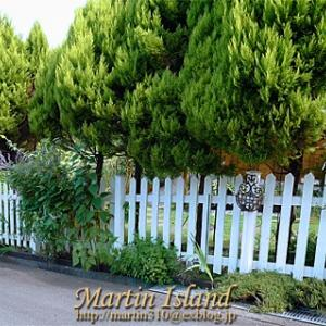 8月の庭 * コニファーの下枝を刈る。